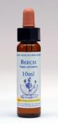 Beech - Beuk  - Bach Bloesem Remedie