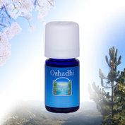 Gember - Oshadhi Etherische Olie